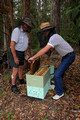 Small Hive Beetle Trap - October 2011