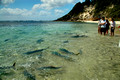 Fish Feeding Daily at 11.00am - Neds Beach, Lord Howe Island, NSW, Australia