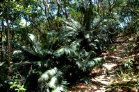Palms and Cycads of the World
