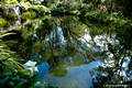 Reflections and Rainforest Grotto,Windyridge Mt Wilson April 16th 2007