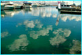 d'Albora Marina Nelson Bay,Cloud Reflections