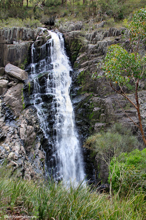 29.3.2011 Aspley Falls, Waterfall Way, NSW
